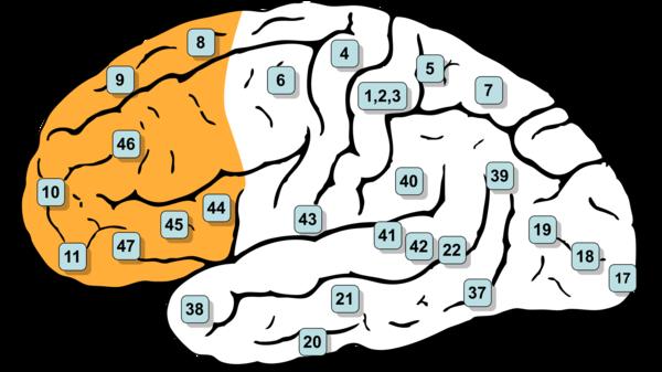 Med thumb memory brain