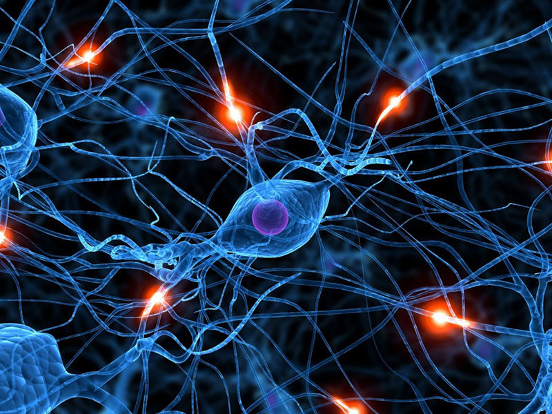 Neural Pathways Science Research 2015