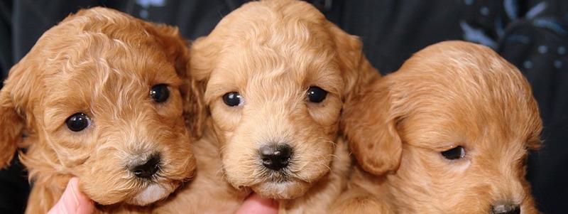 Puppies_StrangeSleepStudies
