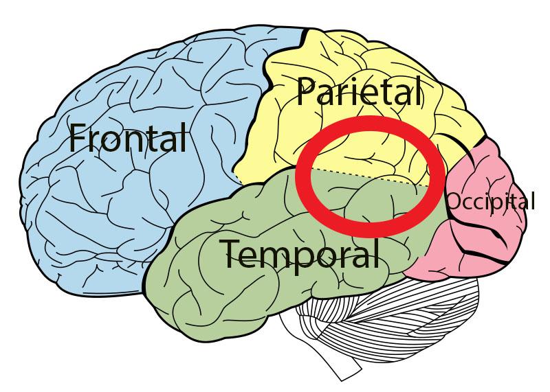 temporoparietal junction_DemonVanquisher
