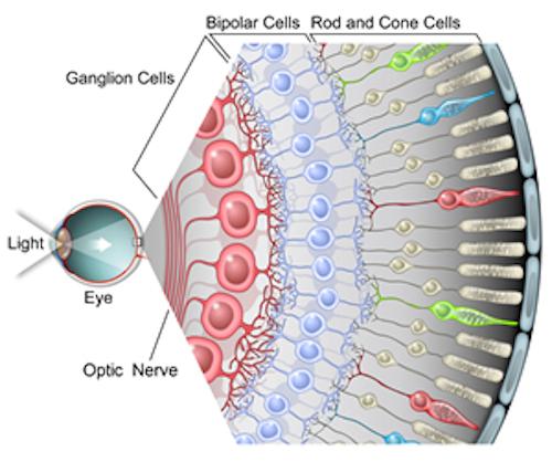 RetinalGanglionCells