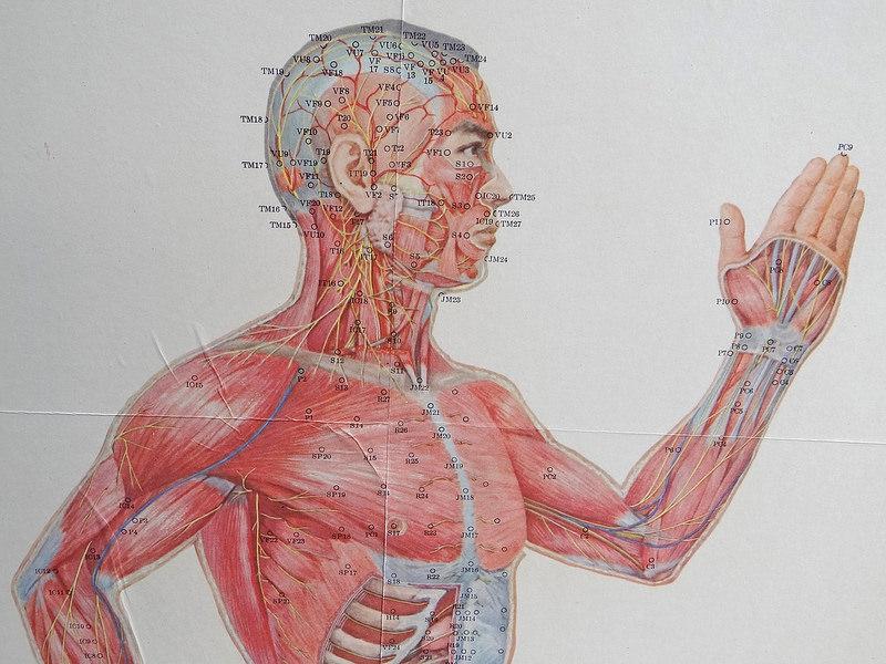 Vintage Acupuncture Chart