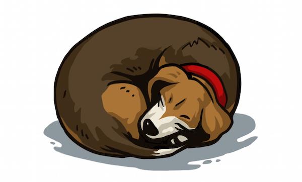 Thebagel_Dogsleep