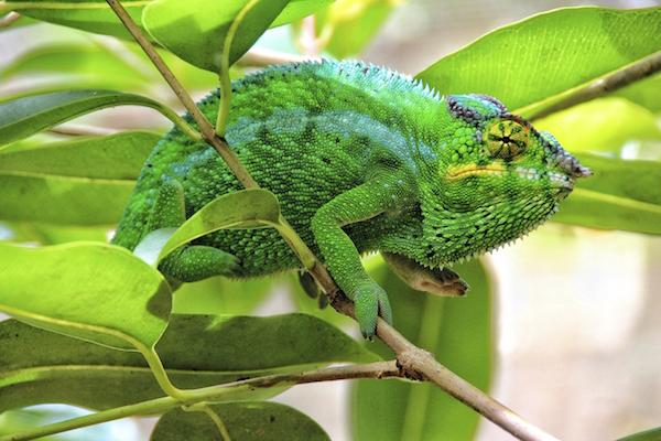 lizard_hibernation