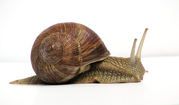Snail_hibernation