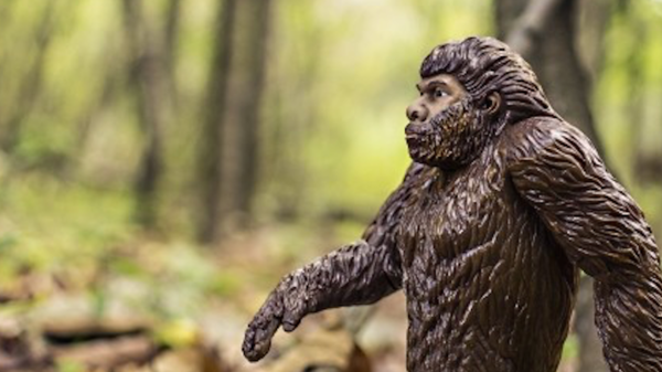 Med thumb ape evolution nests main
