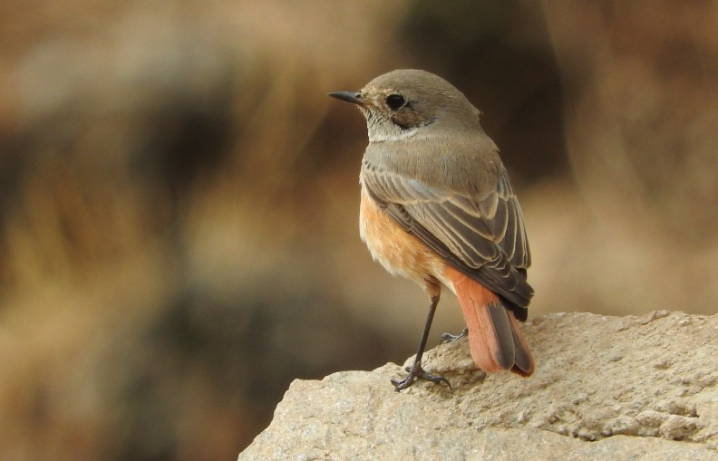 Birdsatnight_Robin