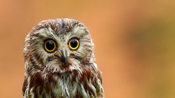 Med thumb baby owlet main