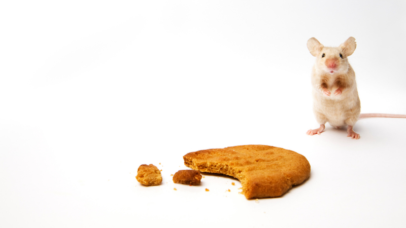 MouseCookie_CONTENT
