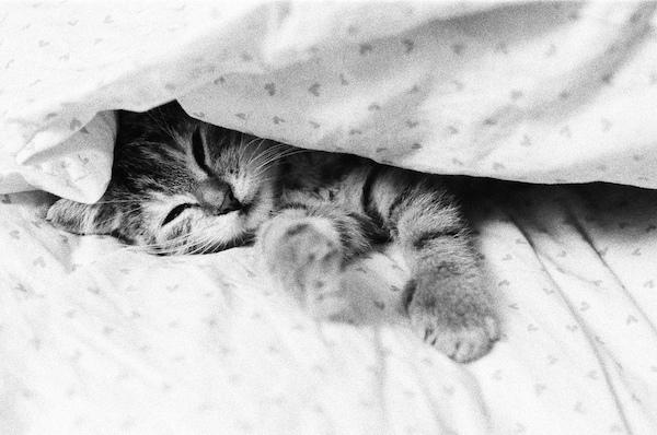 Tuckedin_CatSleeping