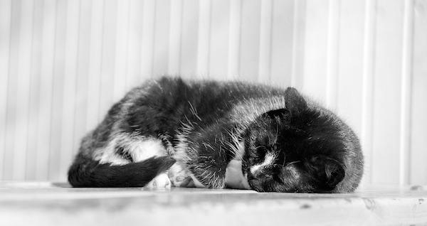 Furball_CatSleeping