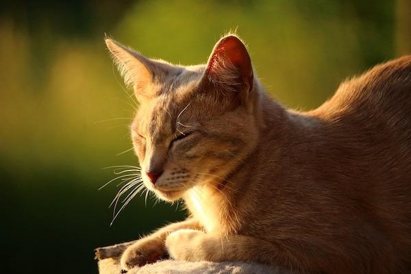 CatNap_Catsleeping