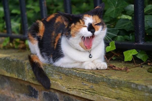 TakingaPaws_CatSleeping