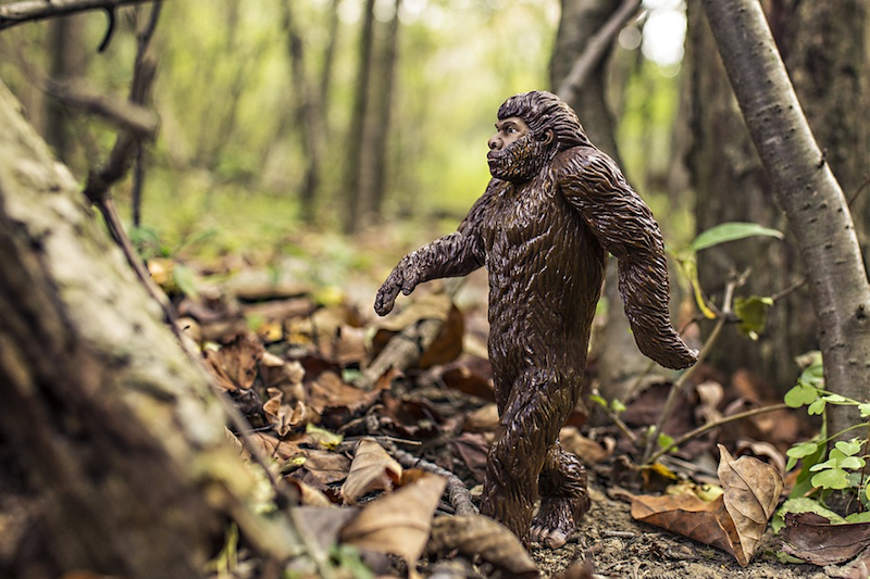 Bigfoot_inset