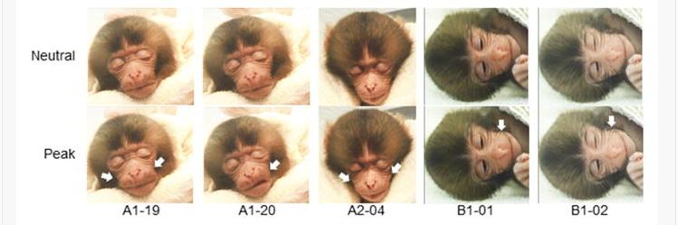 MonkeySleepFig_CONTENT