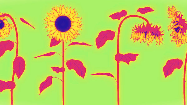 Med thumb sunflowersmain3232