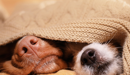 Study: Let Your Dog Into Your Bedroom (If You Want)